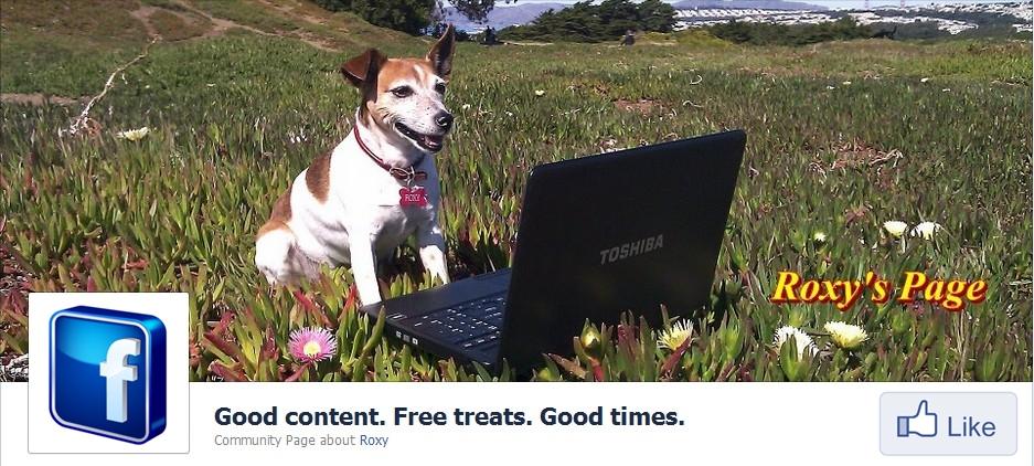 Roxy-page-content-marketing-san-francisco