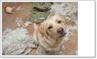 dogtrouble-socialmarketingfella