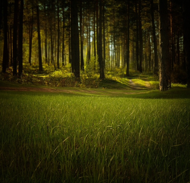 forest-315184_960_720